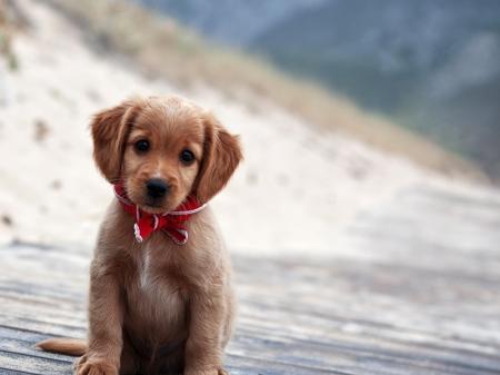 Cute Brown Puppy Dogs Animals Background Wallpapers On Desktop Nexus Image 2351313