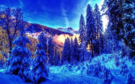 Winter Forest - forest, snow, mountains, nature, trees, sky, winter, landscape