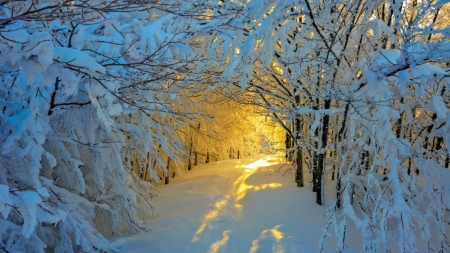 Snowy Path in Winter Sunlight - snow, winter, path, forest, trees, nature, sunlights