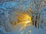 Snowy Path in Winter Sunlight