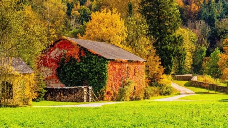 Autumn Cottage - grass, cottage, house, forest, trees, nature, autumn
