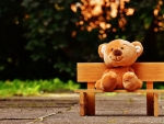 ♥Teddy Bear♥