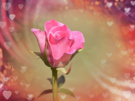 Happy valentines day flowers nature background - Valentine s day flower wallpaper ...