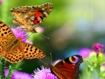 Butterflies in the Colorful Flowers