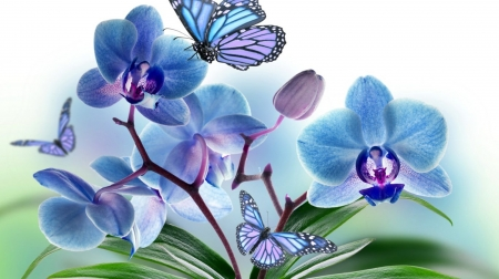 blue orchids - art, still life, orchids, flowers, beauty, spring, butterflies, blue