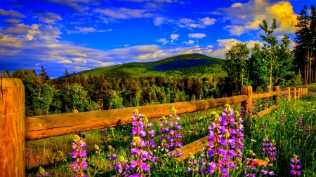 Springtime other nature background wallpapers on desktop nexus image 2352084 - Backgrounds springtime ...