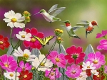 Cosmos and hummingbirds