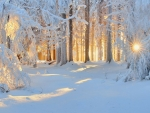Winter Sunlight