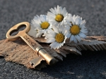 Daisies and key