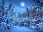 Winter Forest in the Moonlight