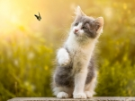 Kitten Play with Butterfly