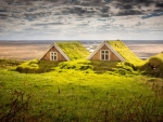 Houses Covered by Moss in Iceland