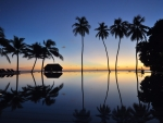 Sunset Reflection with Palm Silhouettes