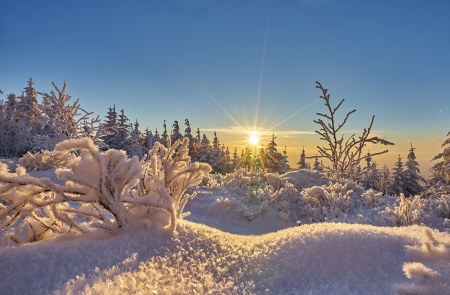 Winter Sun - sunrays, sun, rays, snow, trees, clouds, sky, winter