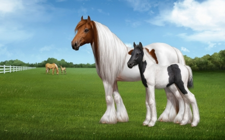 Beautiful Horses Horses Animals Background Wallpapers On Desktop Nexus Image 2354077