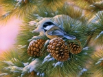 Dawn Chickadee
