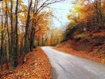 autumn road after village vllase