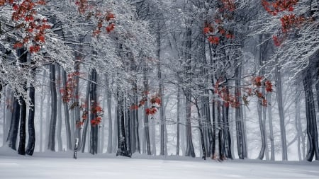 A Touch of Color - forest, leaves, snow, branches, winter