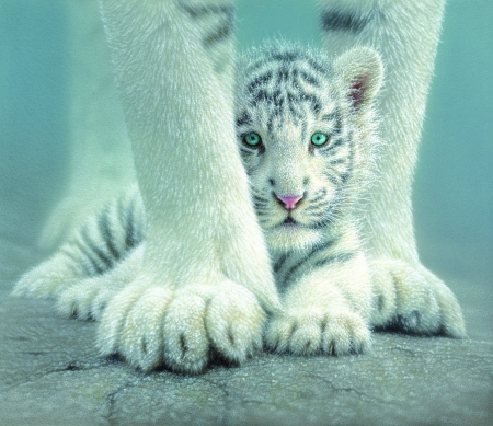 White tiger baby other animals background wallpapers on desktop white tiger baby other animals background wallpapers on desktop nexus image 2354518 voltagebd Images