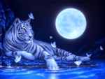Moonlight White Tiger