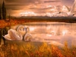 Swans in Autumn