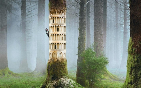 woodpecker in the forest - art, cool, photography, birds, forests, collages, nature