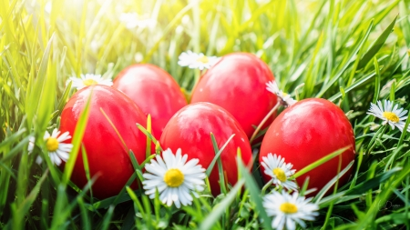 Red Easter Eggs - daisies, Easter, grass, eggs, spring