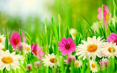 Spring Flowers - green, grass, flowers, Spring, pink, white