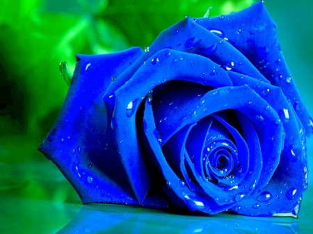 Drops on Blue Rose - rose, macro, flowers, dew, nature, drops, petals, blue