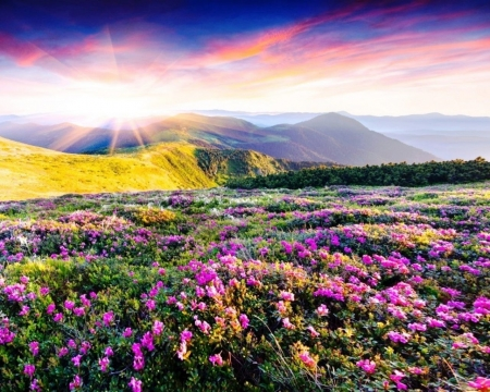 Spring Mountains - sun, mountains, rhododendron, flowers, nature, spring, sky, pink