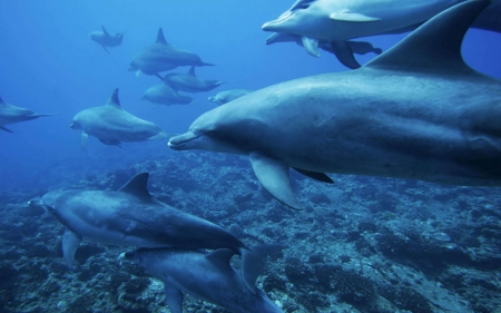 dolphins - coral, dolphin, bed, ocean