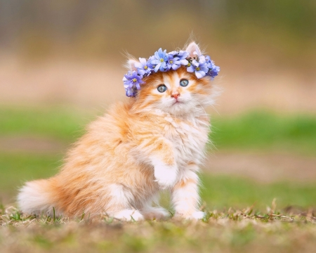 Permalink to Desktop Wallpaper Cats In Flower Crowns