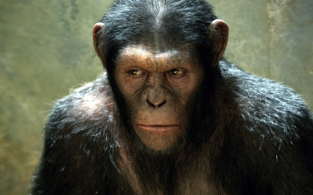 rise of the planet of the apes - primate, ape, chimp, animal