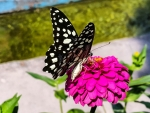 Butterfly on Lovely Flower