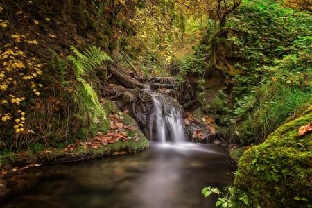 Mossy Forest Creek Waterfall Waterfalls Amp Nature