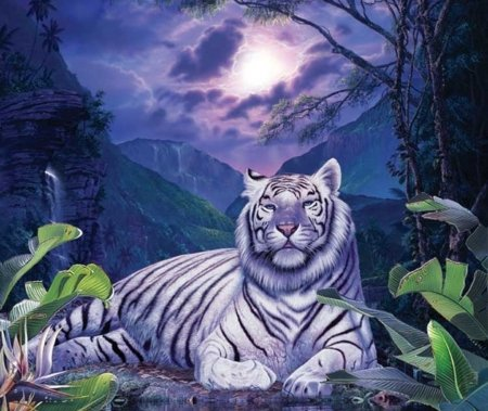 White Tiger Fantasy Abstract Background Wallpapers On Desktop