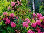 Fall Rhododendrons