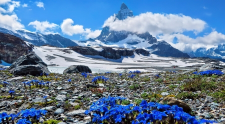 End of winter - rocks, spring, beautiful, sky, winter, mountain, snow, peak, flowers