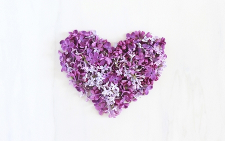 Lilac heart - lilac, valentine, spring, card, liliac, heart, flower, white, pink