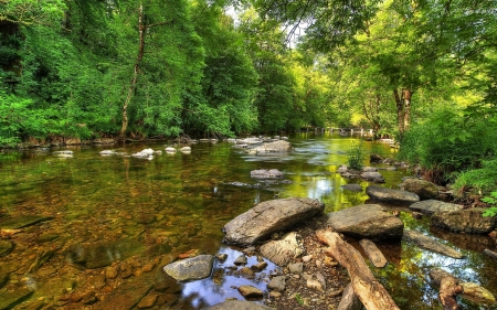 Green Forest by the Rocky River - forest, rocks, green, river, nature, trees