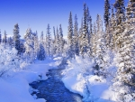 Steamy River by the Snowy Forest