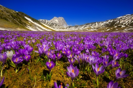 Spring in mountains - crocus, Italy, spring, beautiful, sky, freshness, mountain, flowers, meadow