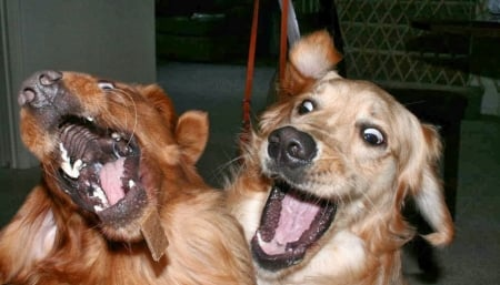 Funny Dogs Dogs Amp Animals Background Wallpapers On