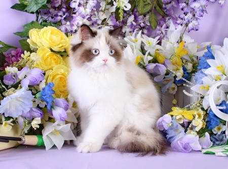 Among spring flowers - sweet, kitten, flowers, spring, fluffy, cat, kitty, adorable, pet, cute