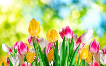 Spring background - tulips, pretty, lovely, bokeh, colorful, flowers, beautiful, spring