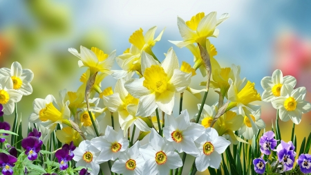 Spring and Easter Flowers - Easter, daffodils, pansies, flowers, Spring