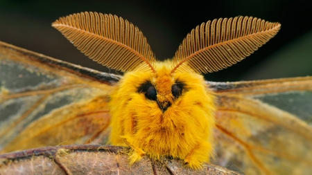 silk moth - animal, insect, silk, moth