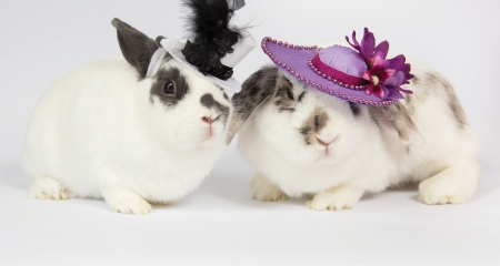 Fency bunnies - rabbit, fency, iepuras, black, easter, elegant, hat, cute, a nimal, feather, bunny, rodent, white, pink, couple
