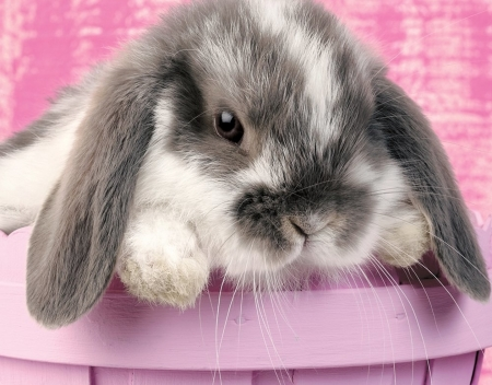 Bunny - easter, rodent, animal, cute, bunny, basket, rabbit, iepuras