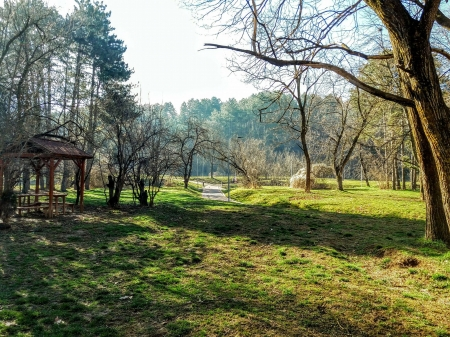 early spring in park - Trees, Spring, Kosovo, Park